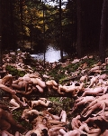 spencer_tunick_2004_pensylvania